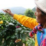 Introduction to Peruvian Coffee