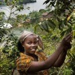 Introduction to Congo Coffee
