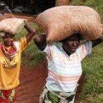 Introduction to Burundi Coffee