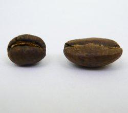 peaberries and normal bean